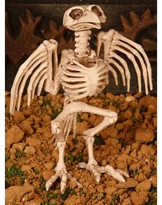 Décoration squelette oiseau